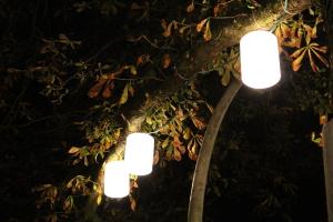 Lampions-imNächtlichenBaum