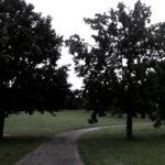 04wegzwischenbäumen